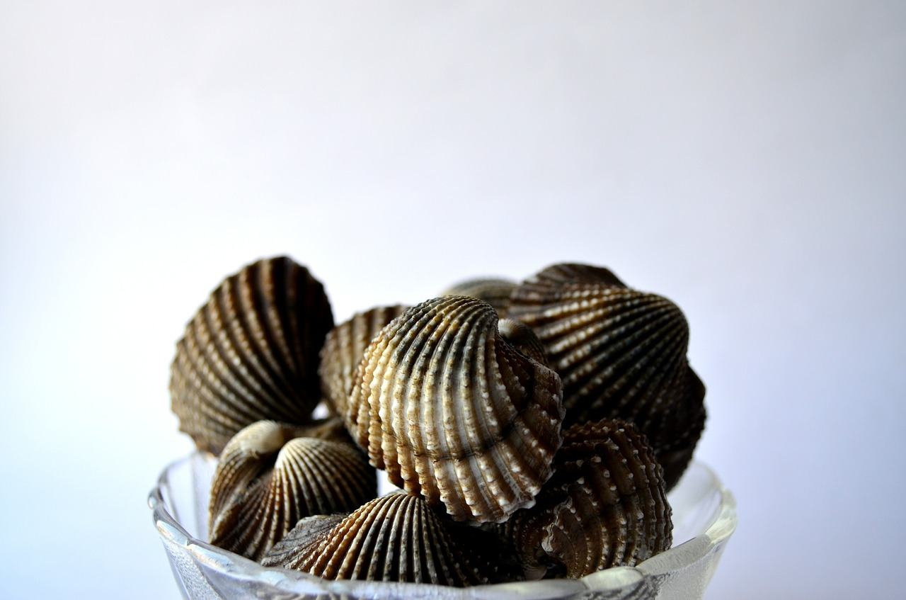 mussels-390508_1280