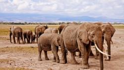 На 3 години: Приключение в Африка