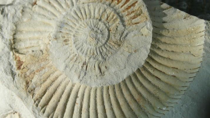 На 5 години: Палеонтолози