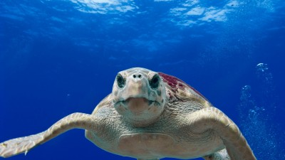 На 5 години: Океан в буркан