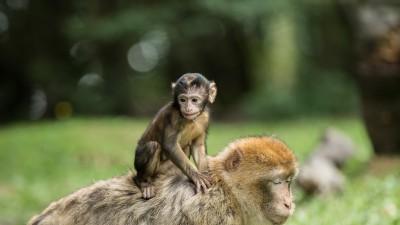 На 2 години: Движи се като маймунка!