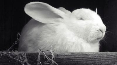 Как да играем с тази приказка: Зайченцето бяло
