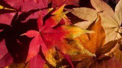 На 3 години: Какво се крие под есенните листа?
