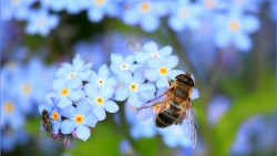 На 6 месеца: ,Пчеличка – приказка с жестове