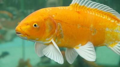 Как да играем с тази приказка: Рибарят и златната рибка