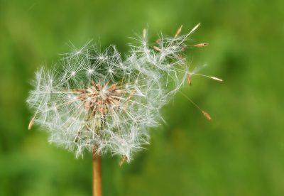 Как да играем с тази приказка: Момче и вятър